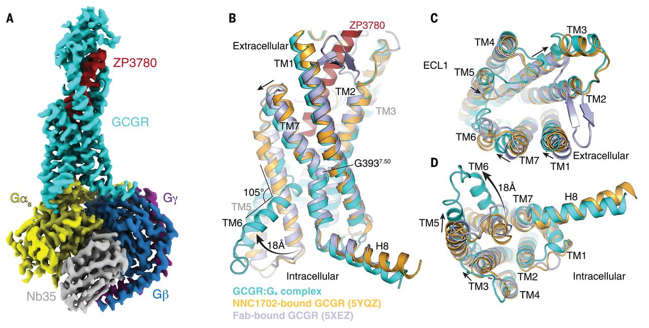 Lab alum Kaavya smashing it in GPCR world